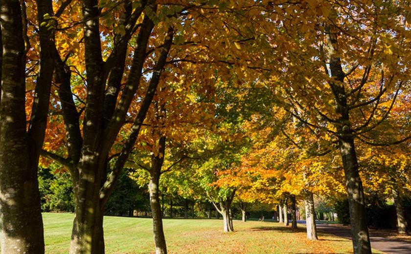 mesbury Abbey Autumn Leaves